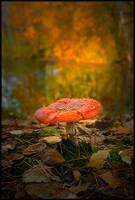 Mushroom by eswendel