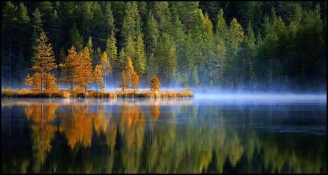 Morning on a swamp lake