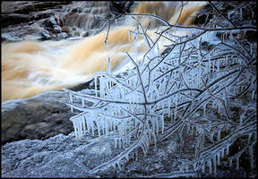 Icy branches by eswendel