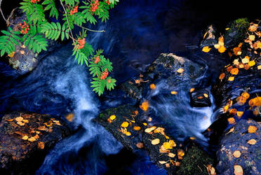 Fall of creek
