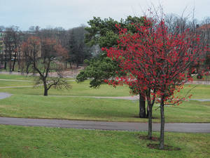 December in park
