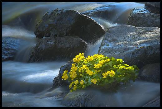 In a creek