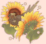 Cockatiel with Sunflowers