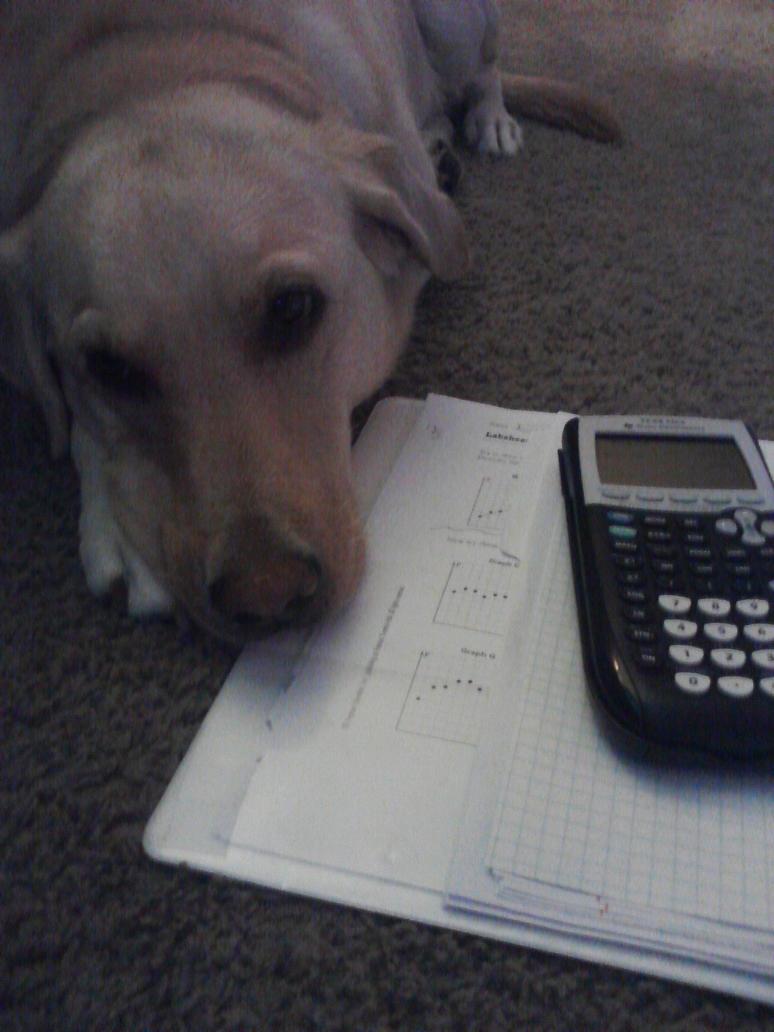 Do my math homework online