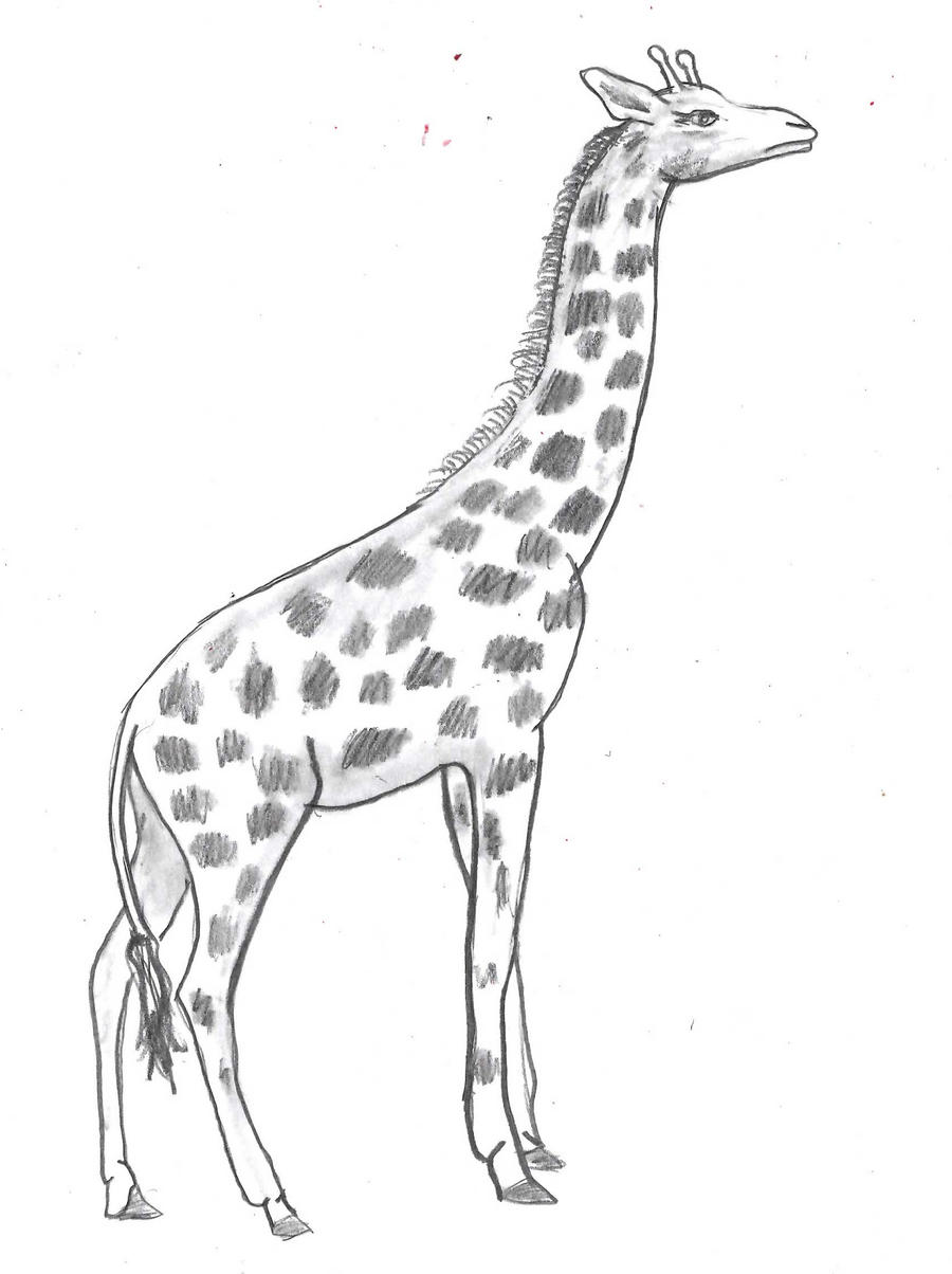 realistic giraffe by lalaesha on DeviantArt Cool Giraffe Drawing