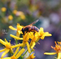 Like a Bee by Hapachai