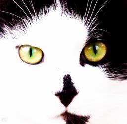 through his eyes by Hapachai