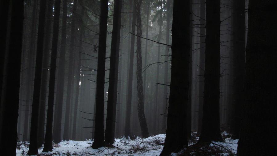 woods by RainyDayFairy