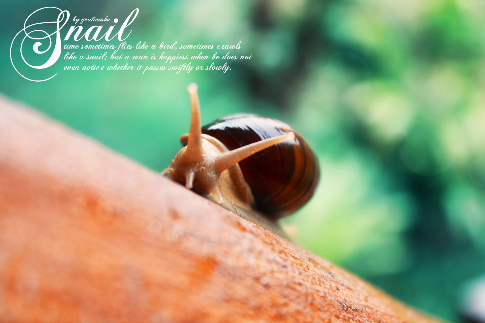 quote s of snail by yerdiansha on deviantart