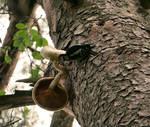 Feasting on a mushroom