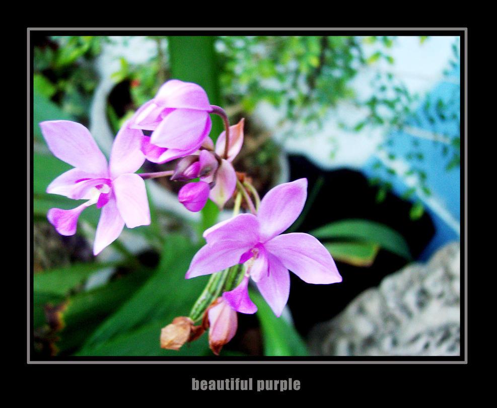 BEAUTIFUL PURPLE by ruthnella