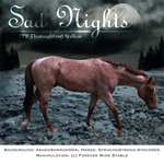 Sad Nights, Thoroughbred Stallion