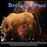 Break At Space, Thoroughbred Stallion