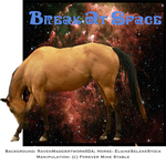 Break At Space, Thoroughbred Stallion