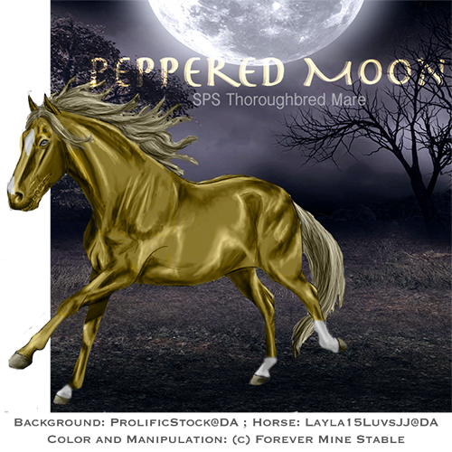 Peppered Moon, Thoroughbred Mare