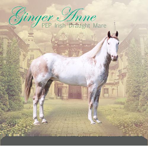 Ginger Anne,