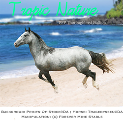Tropic Nature, Thoroughbred Stallion
