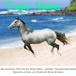 Tropic Nature, Thoroughbred Stallion