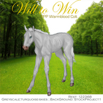 Will to Win, WB Colt