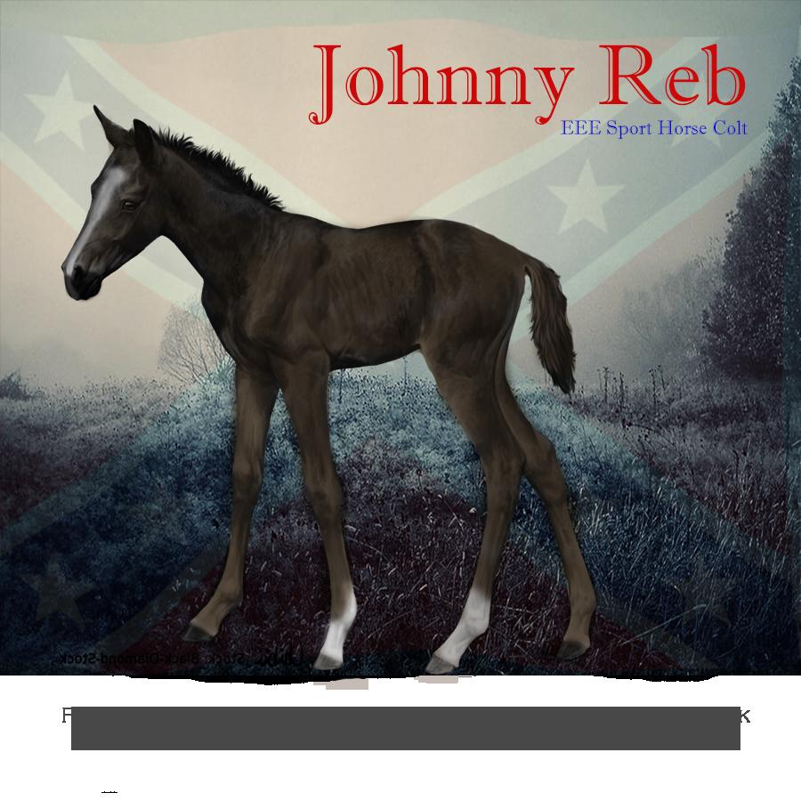 Johnny Reb, Sport Horse Colt