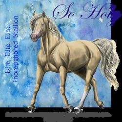 So Holy, Thoroughbred Stallion