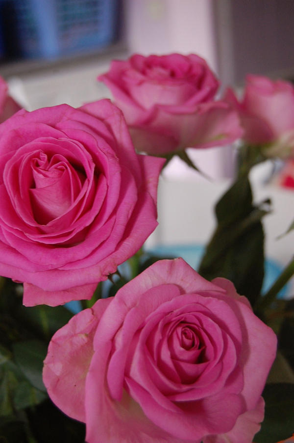 CVECE From_the_Rose_2_by_R_RROMANCE