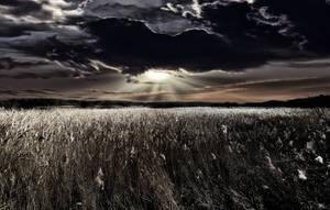 Reeds Of Gold @ Fleet Pond - UK