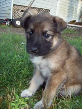 Simi Puppy