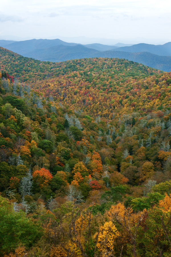 View from East Fork Overlook by eagle79