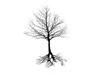 Roots by MooseRocks