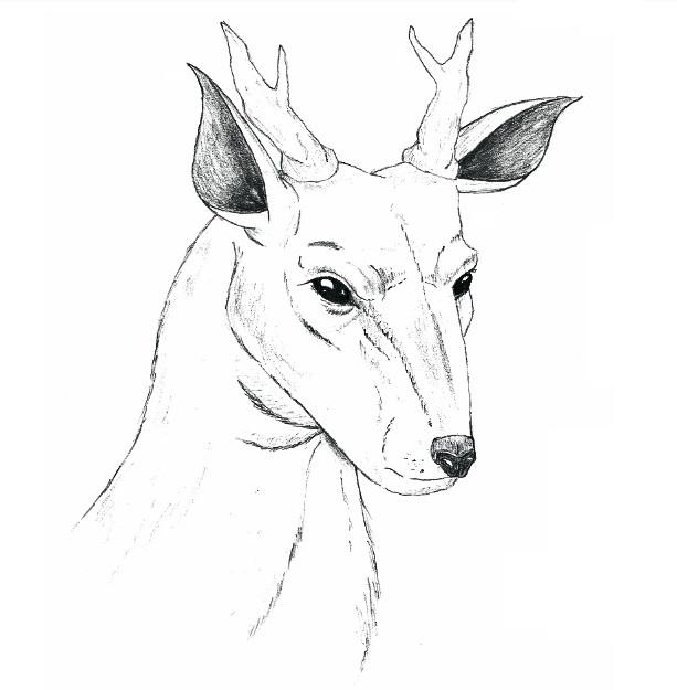 Animal Sketch 2 - Deer...