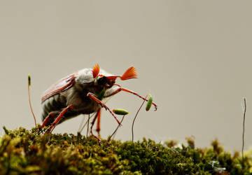 Maybug I by M-M-F