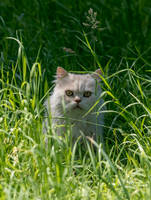 The Cat From The Obersee by M-M-F