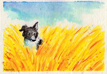Meadow by karpfinchen