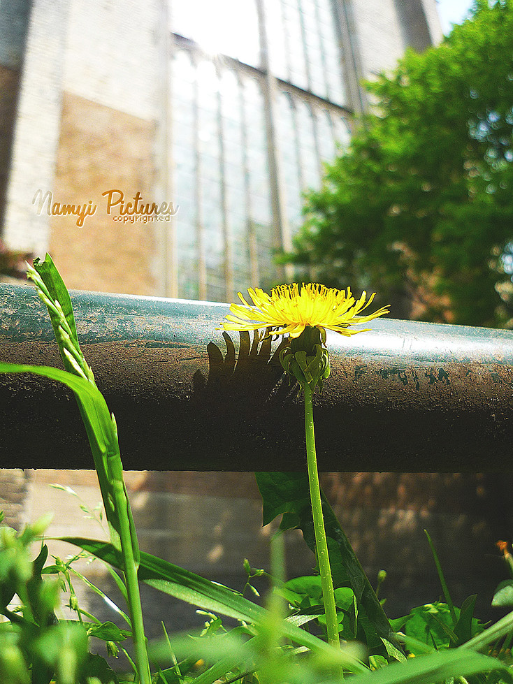 Trying to stand Tall by Namyi