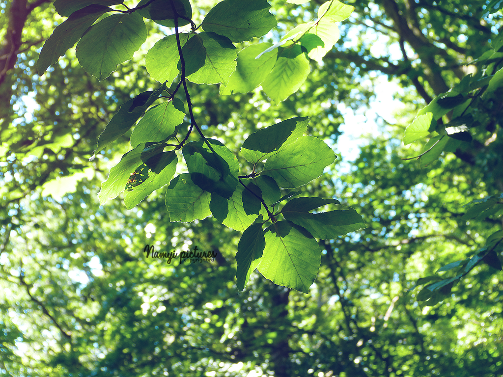 Summer leaves by Namyi
