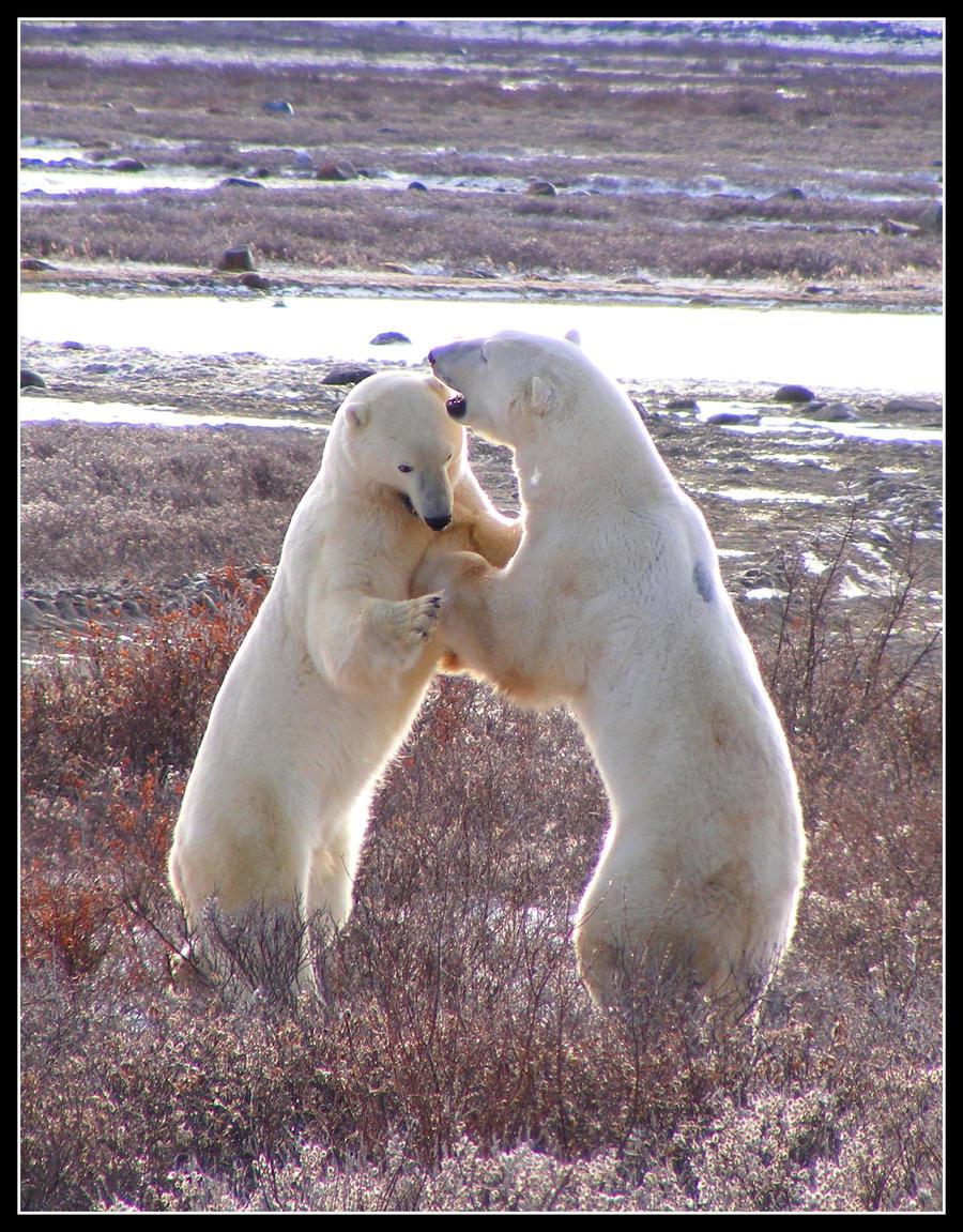 Bear Dance by Katjakay