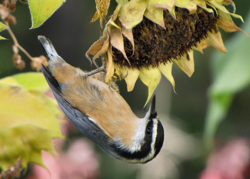 Bird and Sunflower by Katjakay