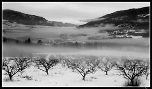 Fog by Katjakay