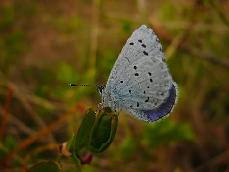 Butterfly Beauty IX