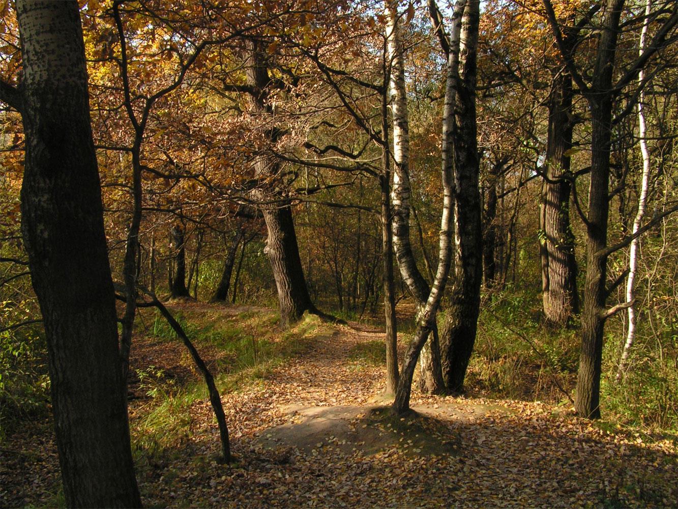 autumn by gogin on deviantart