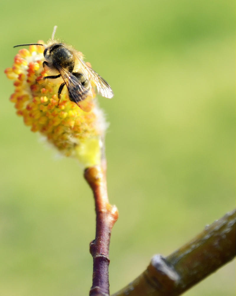 bee spring chat Blooms from spring through fall: don't limit your garden to an end-of-july colour  extravaganza you'll  chat with your neighbours and see what they're planting.