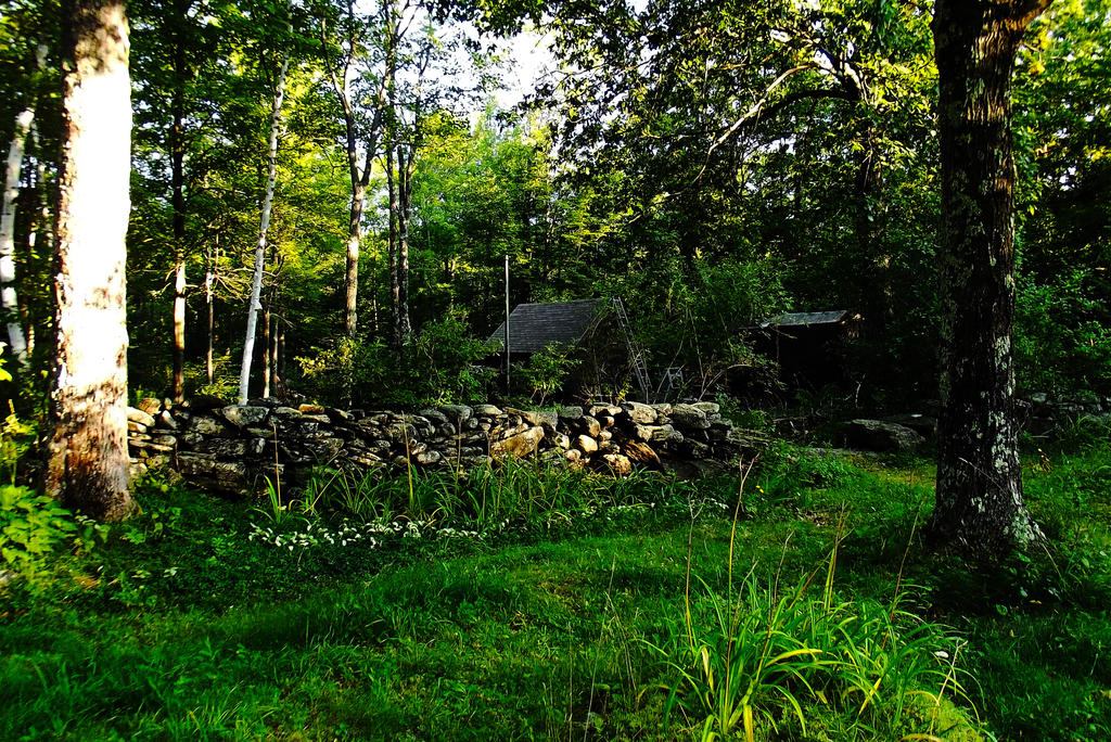 backyard splendor by artwizard133