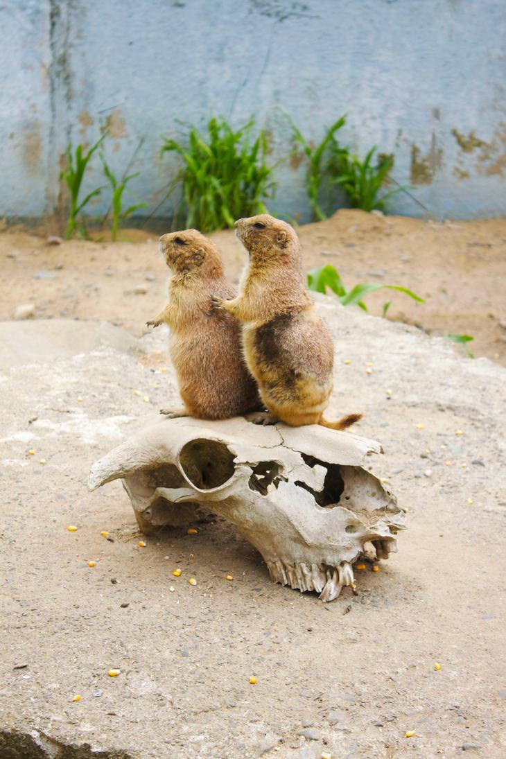 prairie dogs by artwizard133