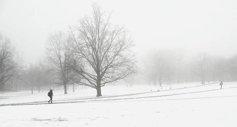 Snow + fog by eszk