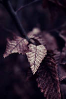 Purple Night by RStessy