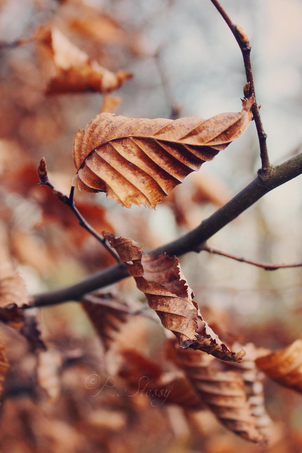 Late autumn by Undergr0und--x8
