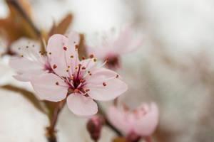 Spring by RStessy