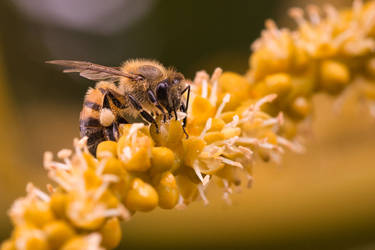 Bee close-up by rwetzel