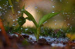 Rain by rwetzel